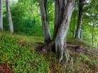 Bałtyk, Rezerwat Chłapowo