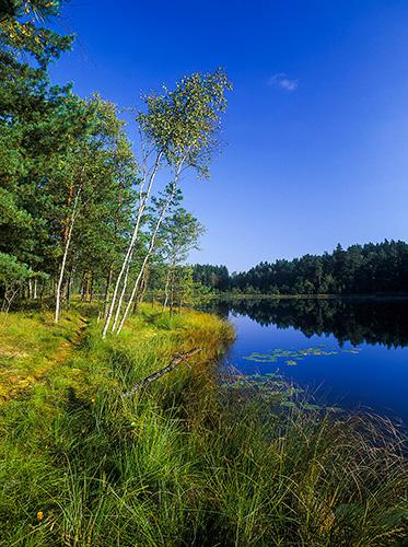 Śródleśne jeziorko