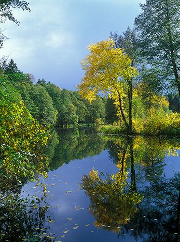 Klony nad rzeką