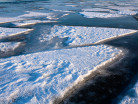 Kra na jeziorze Śniardwy