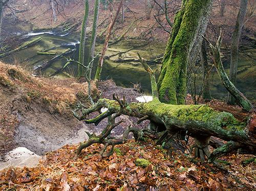Warmia, rzeka Łyna