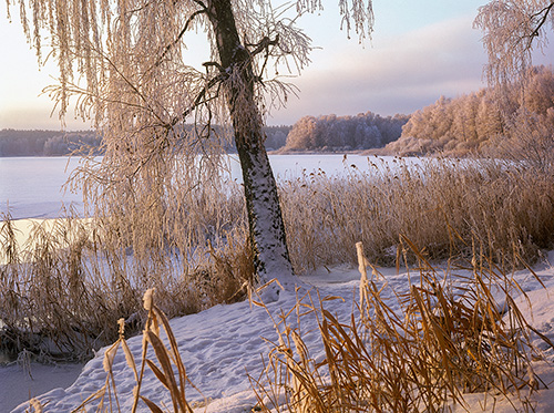 Jezioro w zimowej szacie