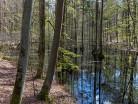 Leśny wodopój