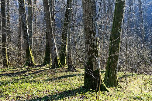 Graby w lesie