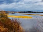 Rzeka Narew