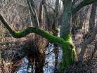 Leśna struga