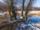 Rzeka Drwęca