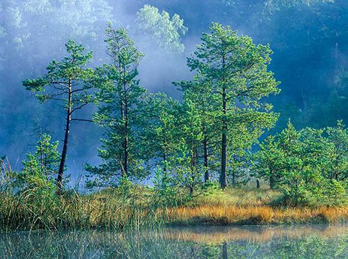Leśne bagienko