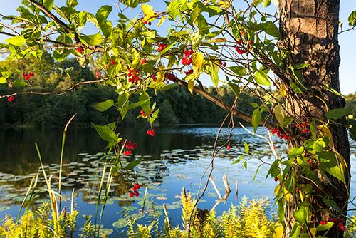 Jezioro Pereszkowo
