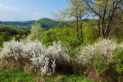 Beskidy wiosną