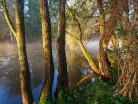 Olchy nad rzeką
