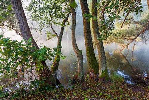 Mgły nad rzeką