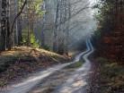 Puszcza Piska, leśna droga
