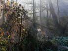 Rezerwat Bagna Nietlickie