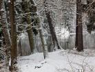 Las świerkowy