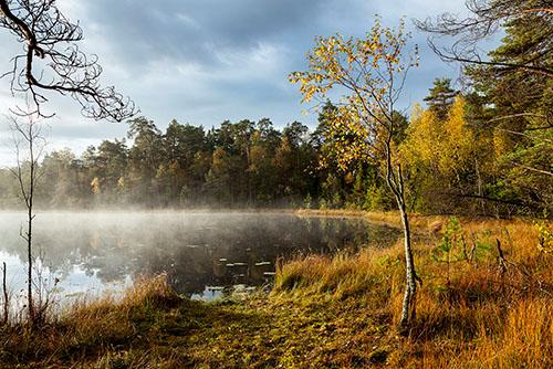 Leśne jeziorko