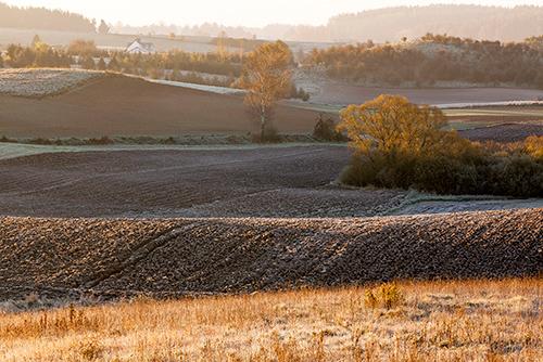 Poranek w polu