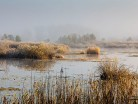 Mgła nad leśnym jeziorem
