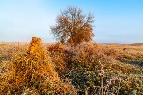 Dzika łąka