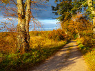 Polna droga jesienią