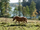 Koń nad jeziorem