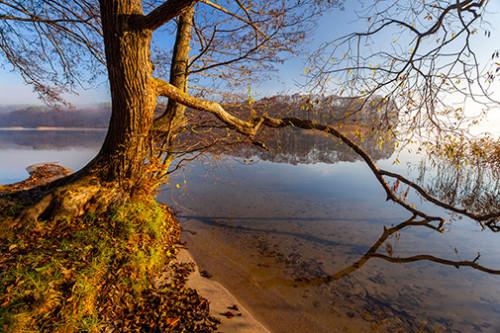 Wierzba nad jeziorem