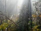 Rezerwat Mszar