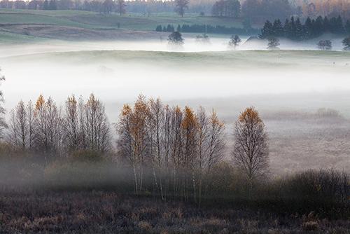 Łąka we mgle