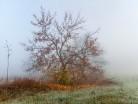 Mgła w polu
