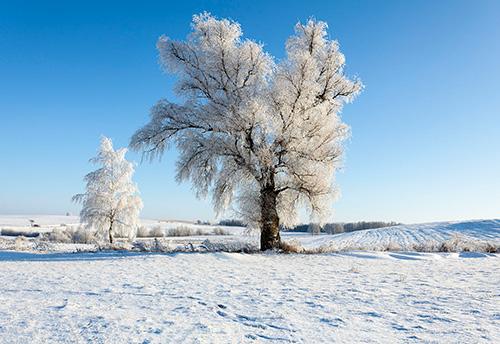 Drzewa w szadziach