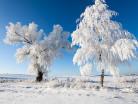 Drzewa i szadź