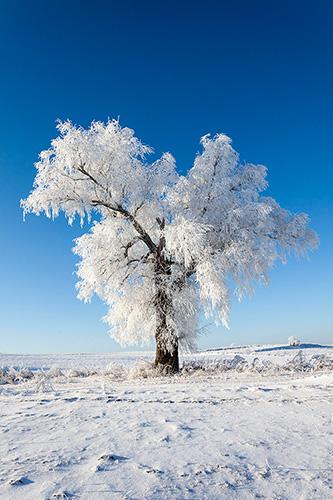Drzewo w polu