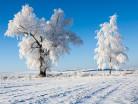 Drzewa zimą