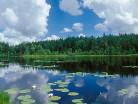 Leśne jezioro