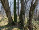 Rezerwat rzeki Wałszy