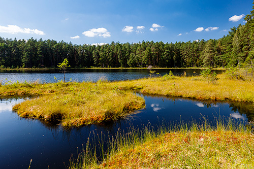 Rezerwat Zakręt