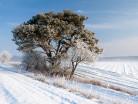 Śnieżna zima