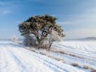 Mroźna zima