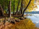 Olchy nad jeziorem